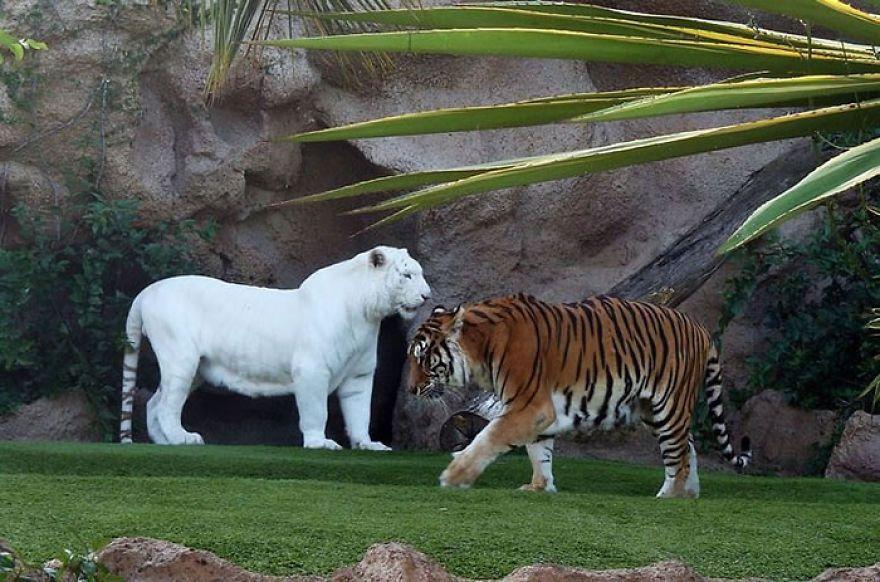 Удивительные животные-альбиносы