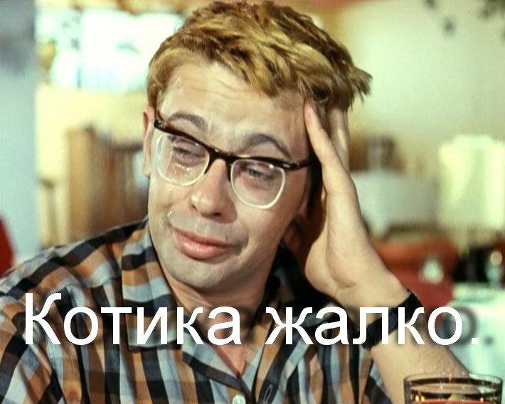 Шурик КОТИКА ЖАЛКО.jpg