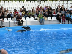 Дельфинарий Немо в Одессе