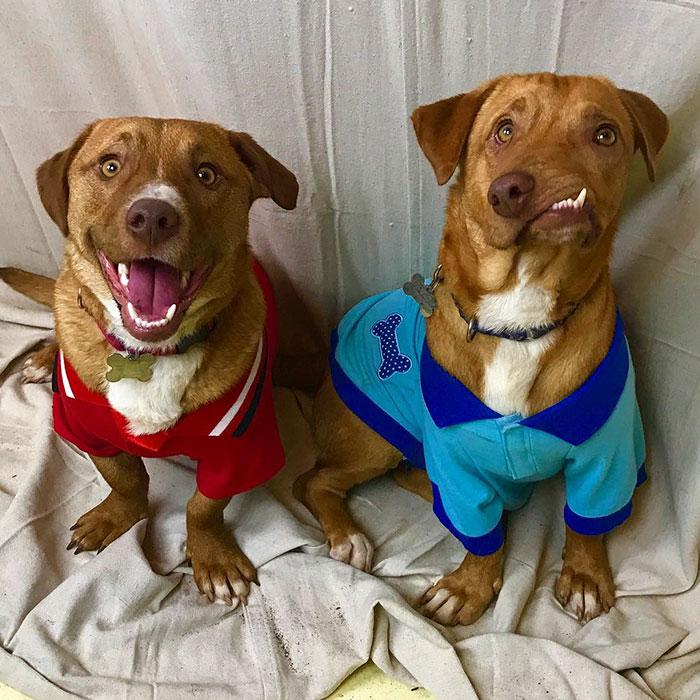 Luvable Dog Rescue забрала братьев и позаботится о том, чтобы они оказались в новой семье вместе. Но