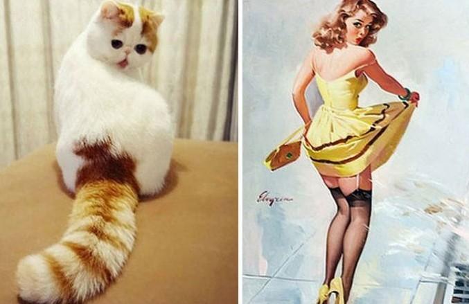 25 смешных котов и их известных прототипов