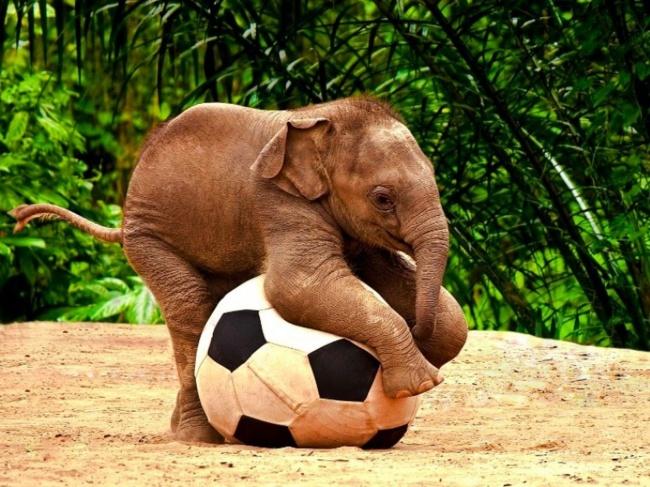 Интересно, какого размера ворота вэтом футболе?