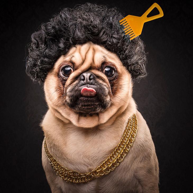 2. Мопс — древняя китайская порода. Мопсы были собаками знати и проживали в богатых домах. В те врем