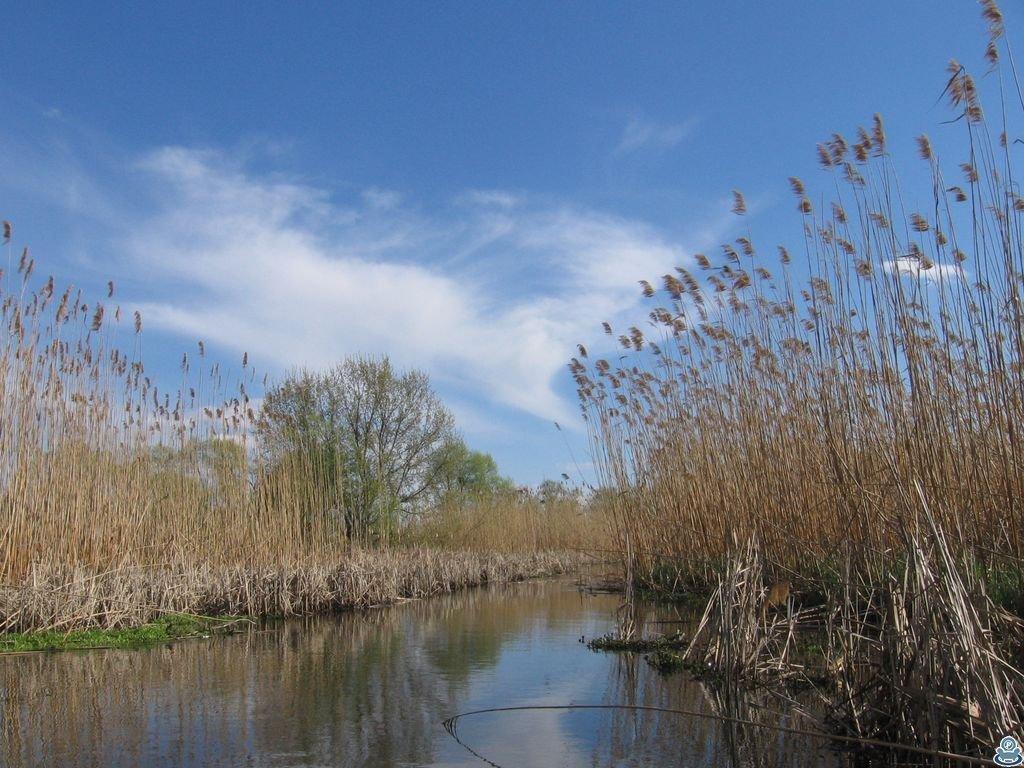 ;Плавни реки Боромля