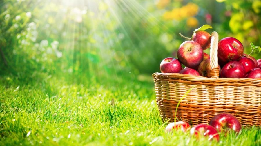 Каждодневное употребление яблок понижает риск ранней смерти— Ученые