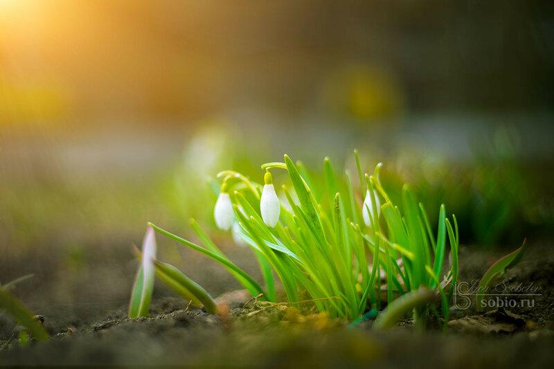 Маленькие дети весны