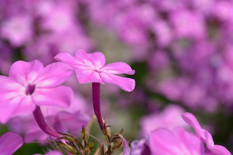 цветочное 4 16.jpg
