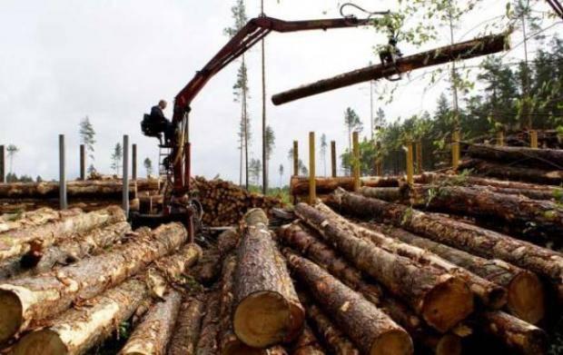 Деньги в обмен на варварство: ЕС стимулирует уничтожение украинских лесов - заместитель председателя бюджетного комитета ВР