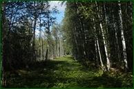 http://img-fotki.yandex.ru/get/126937/15842935.38c/0_eb37f_32e5624_orig.jpg