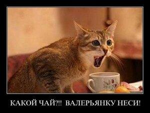 https://img-fotki.yandex.ru/get/126937/194408087.13/0_12aa2a_a8feec98_M.jpg
