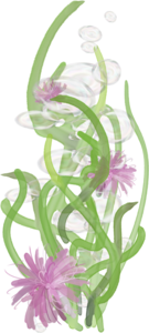водоросли