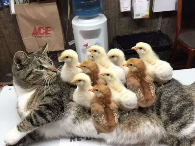 © SomeGuy8010/reddit.com  Это его первый визит вветеринарную клинику. Ипервый экзистенциальн