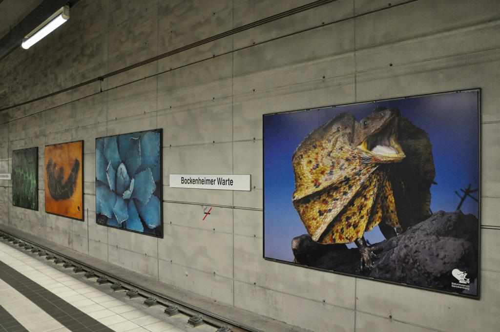 Станция Боккенхаймер Варте. (jaime.silva)