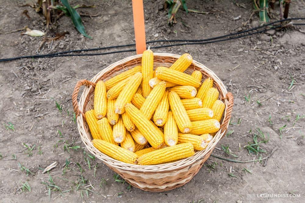 ВПензенской области намолочено неменее 1,5 млн. тонн зерна