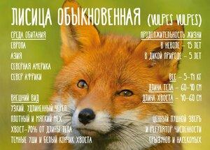 https://img-fotki.yandex.ru/get/126937/55419436.146/0_b0e0a_ec1a154_M.jpg