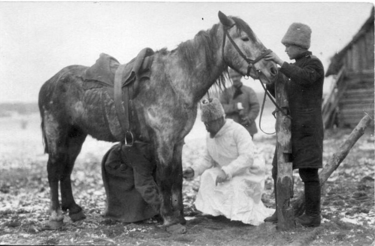Осмотр боевой лошади ветеринаром