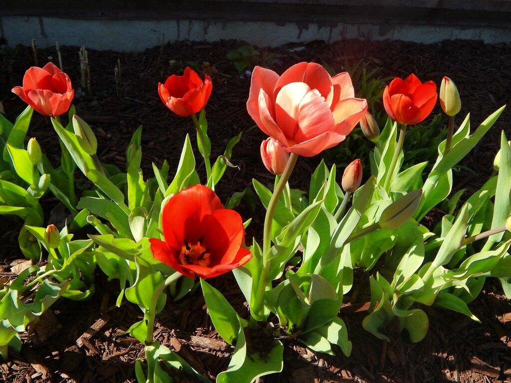 В нашем городе весна.