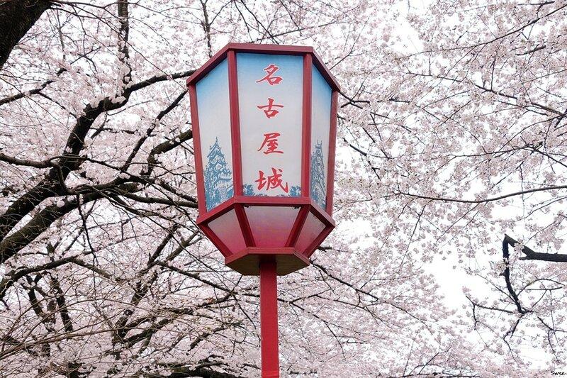 Сакура и фонарь замка Нагоя
