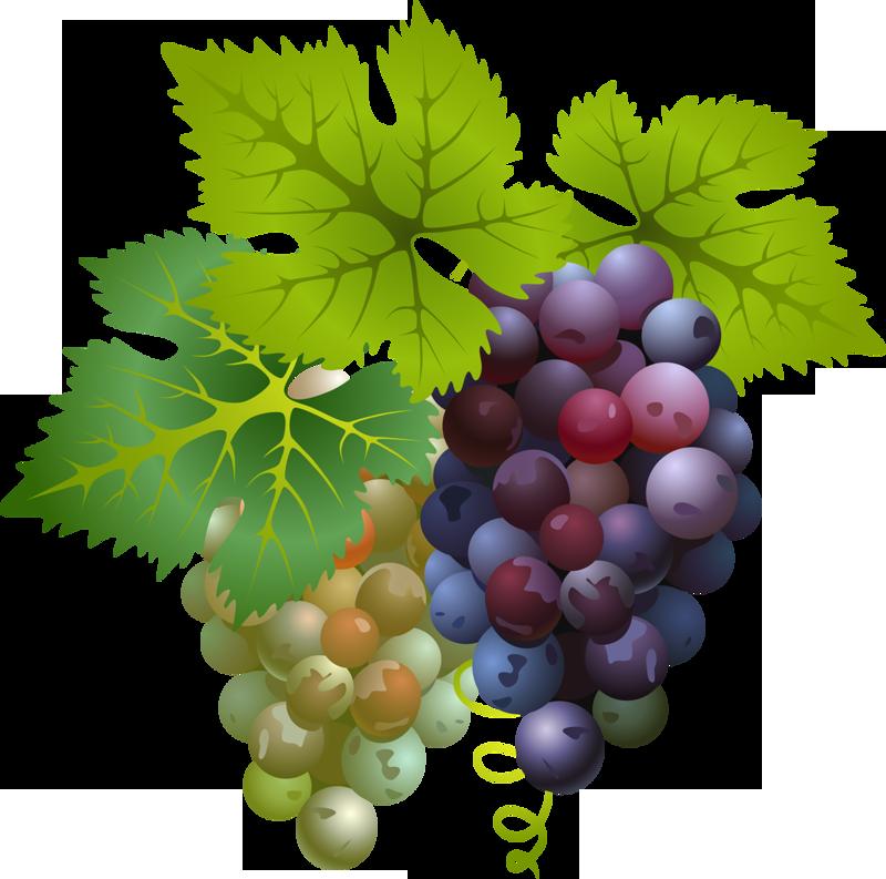присутствие картинка виноградной ветки результате аварии