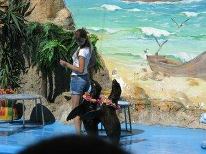 Дельфинарий в Одессе на берегу моря