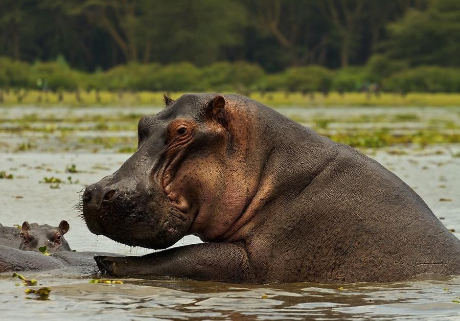 Животные, находящиеся на грани исчезновения