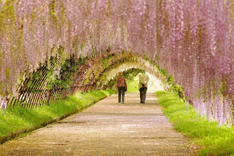 11. Япония. Тоннель глицинии. (Binary cse)