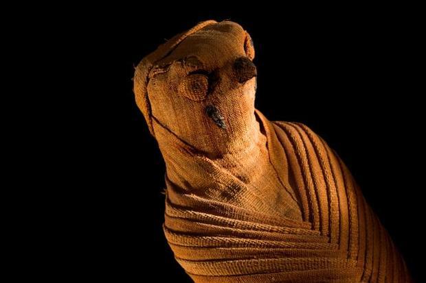 Детали необыкновенного открытия— Загадка мумии ребенка