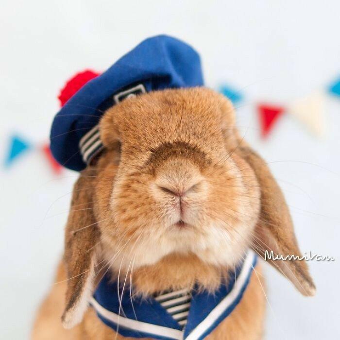 Кролик-моряк