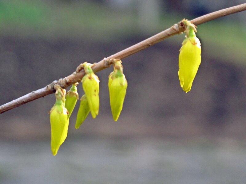 Весеннее золото