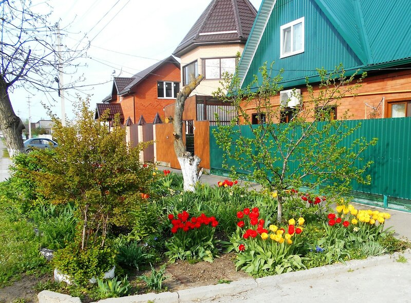 Цветы у дома, в день весенний ... DSCN5118.JPG