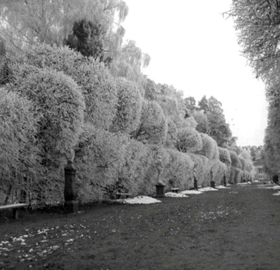 1910. Усадьба Кусково зимой