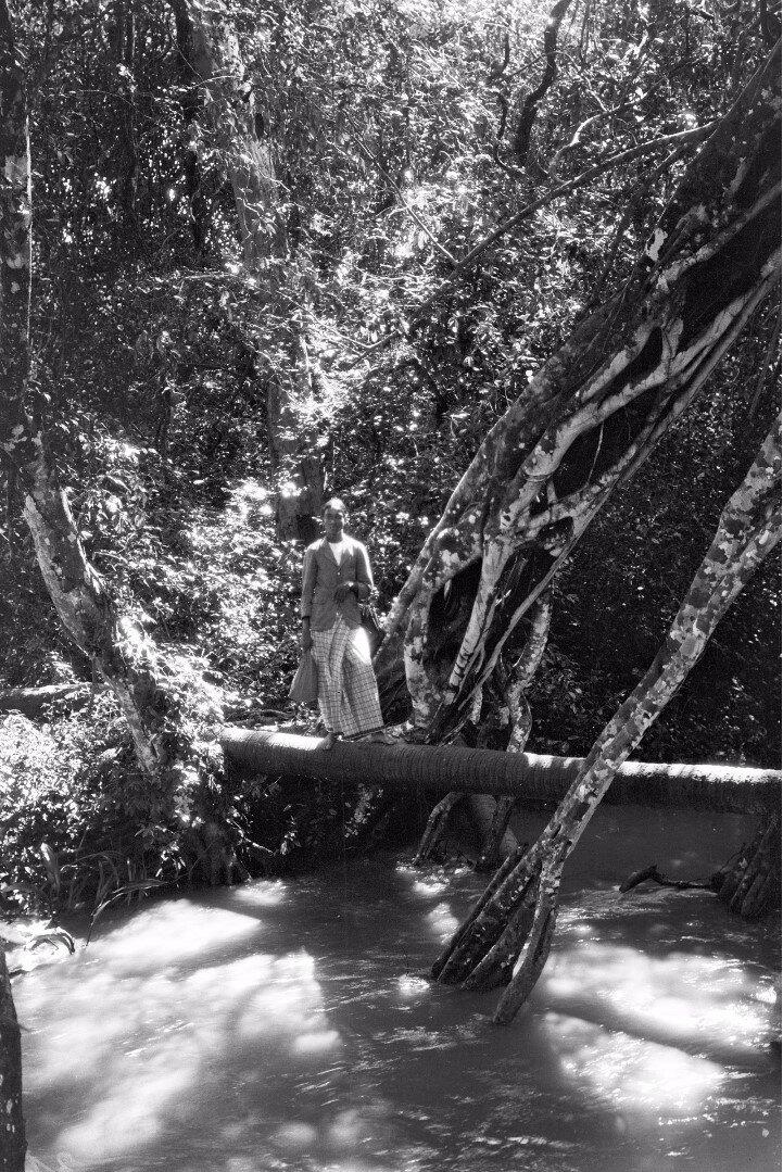 37. Ствол дерева на пути из Тимбирии в Медагаму