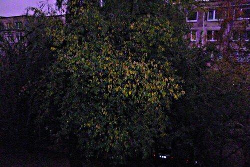 PicsArt_10-08-05.39.49.jpg