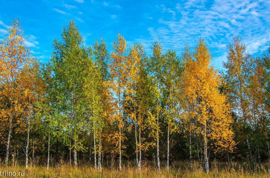 На Урале осень....Сегодня небо свежее и чистое