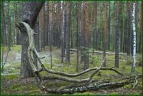 http://img-fotki.yandex.ru/get/128446/15842935.373/0_ea0f0_9729c2f9_orig.jpg