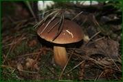 http://img-fotki.yandex.ru/get/128446/15842935.385/0_eadff_c7fcea38_orig.jpg