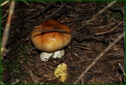 http://img-fotki.yandex.ru/get/128446/15842935.387/0_eae57_547498f8_orig.jpg