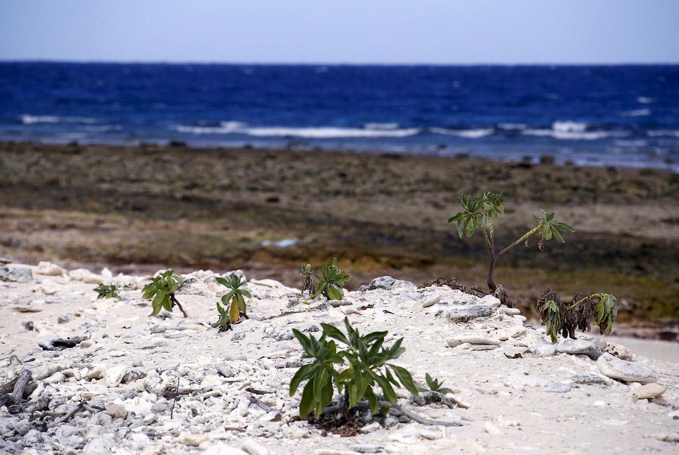 Возраст большей части Барьерного рифа не превышает 400 000 лет (в остальное время уровень моря