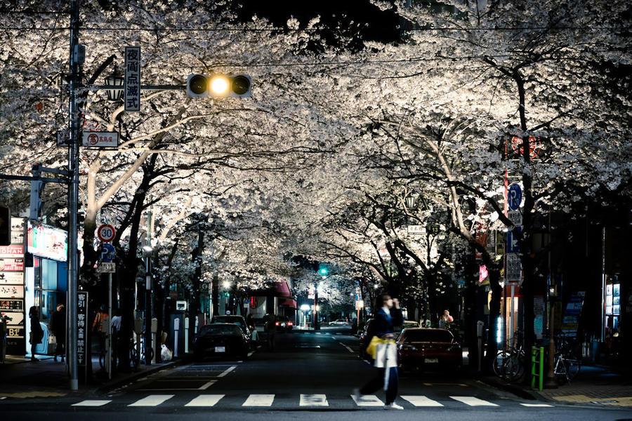 1. Только взгляните на эту улицу цветущих деревьев!