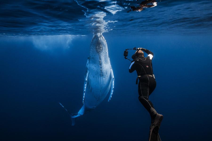 1. Ежегодно, с июля по октябрь, в теплых водах Индийского океана можно повстречать множество горбаты