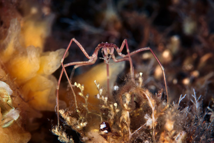 2. Сцифомедуза, на 98 % состоящая из воды. (Фото Alexander Semenovs):