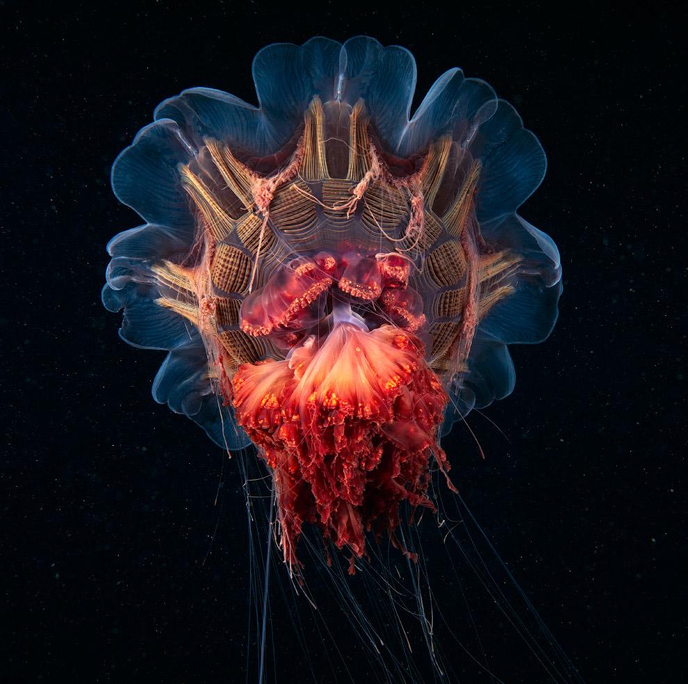 3. Многощетинковые черви или полихеты. Тело длиной 2-3 метра состоит из множества (иногда до не