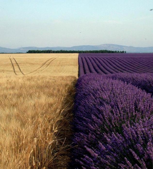 Два поля дают возможность насладиться необычным сочетанием ярких цветов. Высокотехнологичная парковк