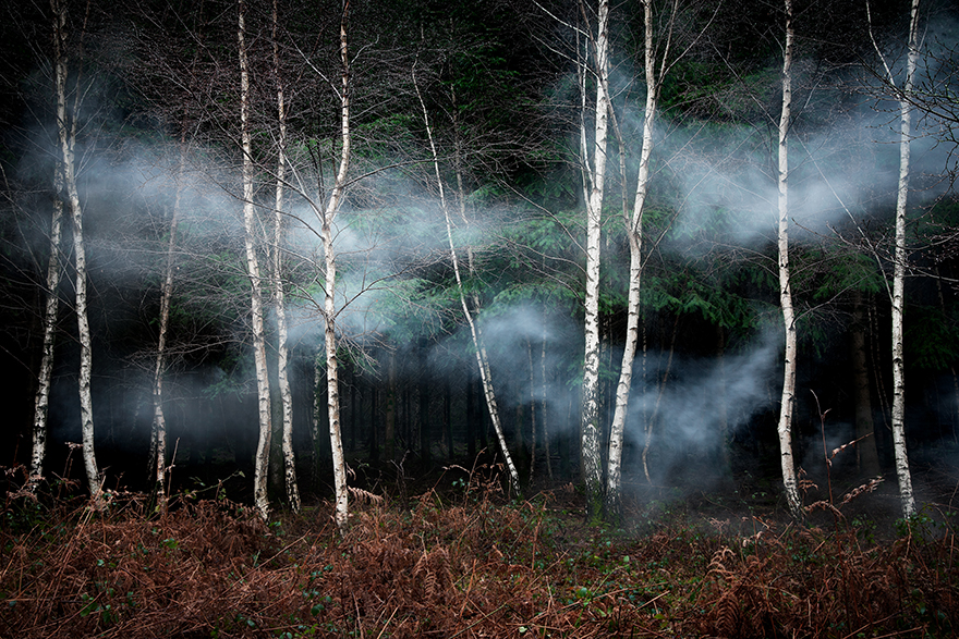 Ellie Davies Creates Forest Landscapes Illuminated with Fields of Stars and Smoke