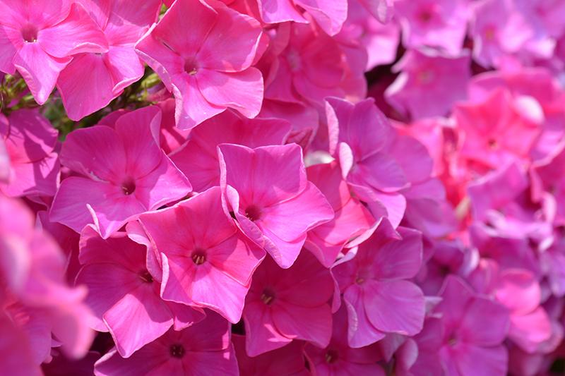 цветочное 6 16.jpg