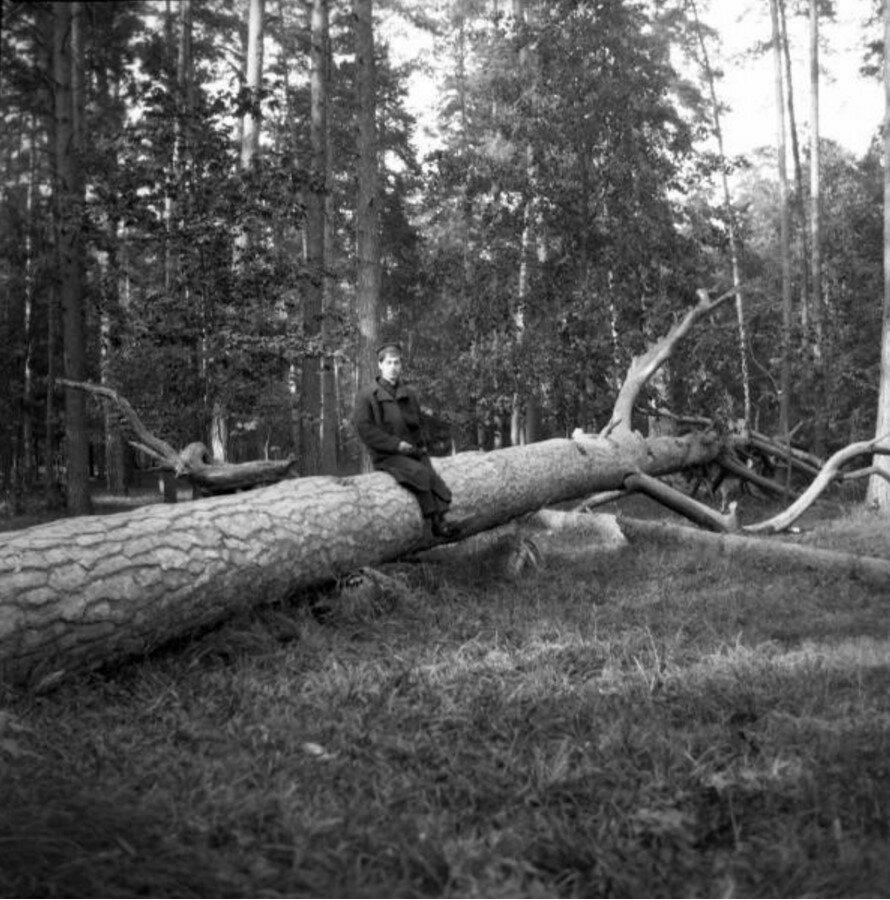 1904. Мотя в Сокольниках на поваленном дереве