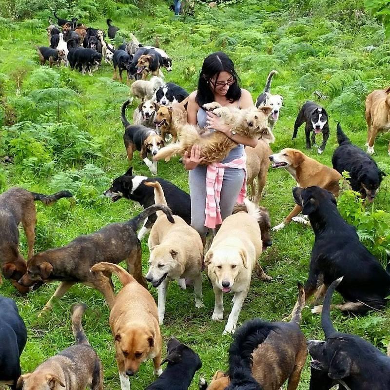 Рай для собак в Коста-Рике