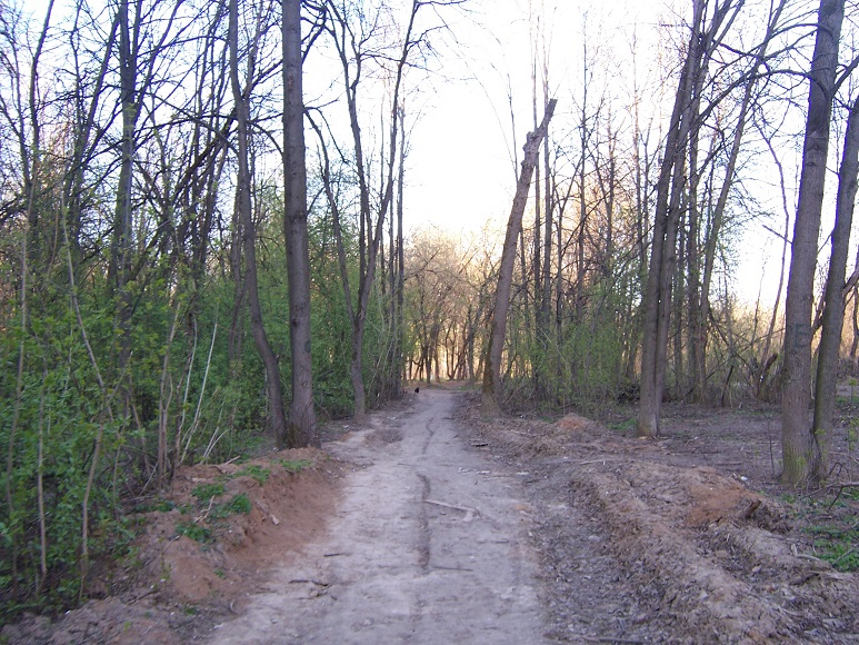как благоустроители изуродовали лес Ивановского