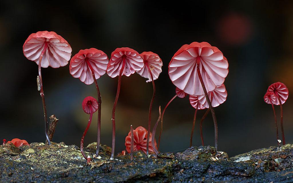 Стив Эксфорд: Красивые фотографии грибов Австралии 0 165cc8 aeab18e orig