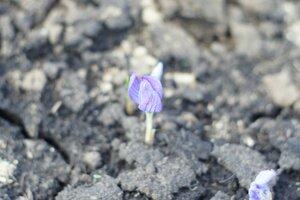 Весна идет весне дорогу - Страница 31 0_1390eb_491a40d2_M
